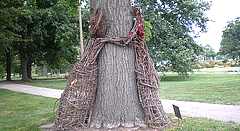 The Tree Hugger Project